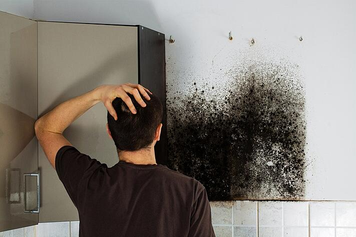 Du bois pourri se cache-t-il dans votre maison ?